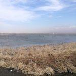 印旛沼と春一番と