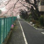 桜開花宣言と寒暖と