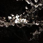 進撃の巨人と夜桜と
