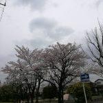 春の長雨と鬼アプリと