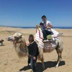 鳥取砂丘とラクダと