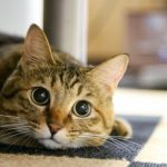 小さな子猫と紙芝居と