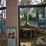 上野動物公園とシャンシャンと