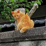 登園と猫と