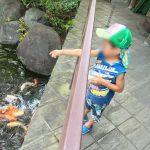 鯉にエサやりと猛暑日と