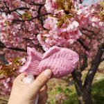 河津桜とiZooと