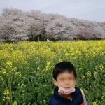 幸手桜と祭り中止と