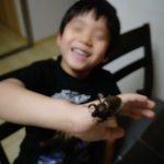 カブトムシと成虫と