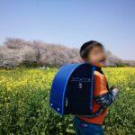 権現堂公園の桜といちご狩り