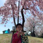 まつばら綾瀬川公園で花見